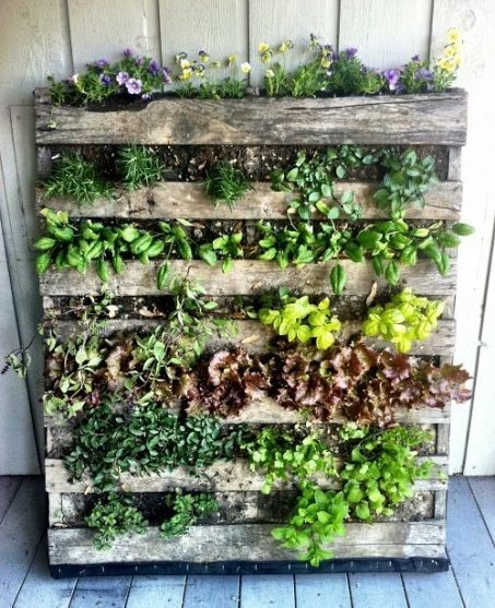 vertical garden DIY pallet project