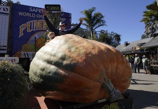 largest pumpkin in the us